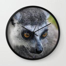 Closeup of a Ring Tailed Lemur Wall Clock