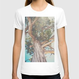 looking up through the leaves of the Juniper Tree ... T-shirt