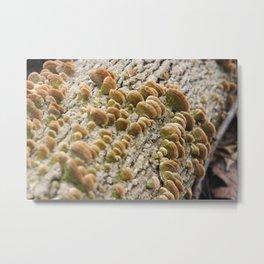 Mushroom Shells on a White Log Metal Print