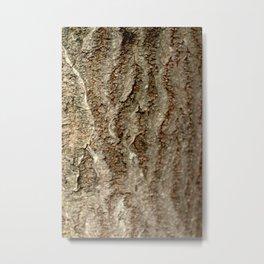 Tree bark oak close up texture Metal Print