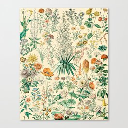 Floral Diagram // Fleurs IV by Adolphe Millot XL 19th Century French Science Textbook Artwork Canvas Print