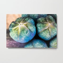 commen grape hyacinth Metal Print