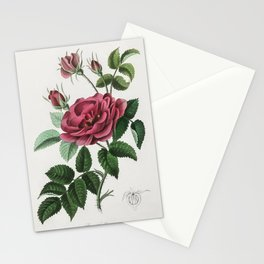 French rose (Rosa gallica) illustration from Medical Botany (1836) by John Stephenson and James Mors Stationery Cards