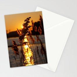 Sunlit Phragmites Stationery Cards