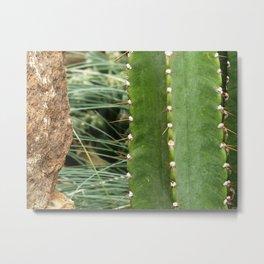 Cactus House II Metal Print