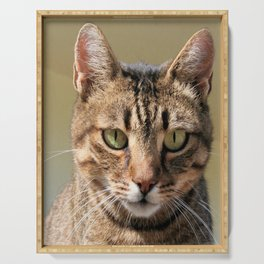 Portrait Of A Cute Tabby Cat With Direct Eye Contact Serving Tray