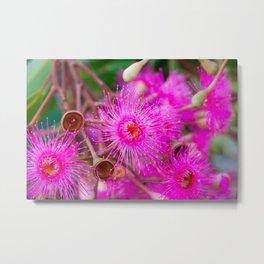 Flowering Gum. 2. The Flower. Australia. Metal Print