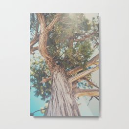 looking up through the leaves of the Juniper Tree ... Metal Print