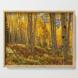 Autumn Aspen Forest in Aspen Colorado USA Serving Tray
