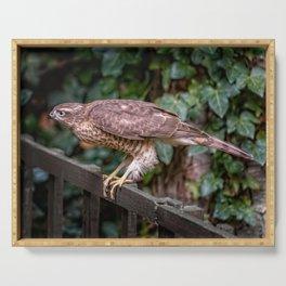 Sparrowhawk Serving Tray