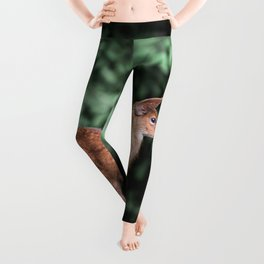 Cute Animals Forest Fawn - Black Tailed Deer Leggings