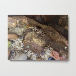 Rock Crab Metal Print