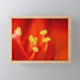 Vibrant red amarillys  Framed Mini Art Print