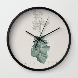 crassula lactea Redoute Roses 1 Wall Clock