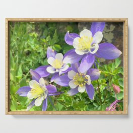 Watercolor Flower, Columbine 05, Fall River Road, RMNP, Colorado Serving Tray
