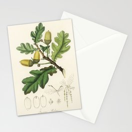 English oak (Quercus) robur illustration from Medical Botany (1836) by John Stephenson and James Mor Stationery Cards