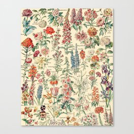 Vintage Floral Drawings // Fleurs by Adolphe Millot XL 19th Century Science Textbook Artwork Canvas Print