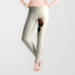 Lesser spotted woodpecker (Dryobates minor) illustrated by the von Wright brothers Leggings
