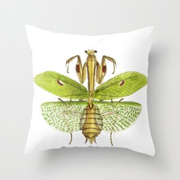 Sacred mantis or Idol mantis  from The Naturalists Miscellany (1789-1813) by George Shaw (1751-1813) Throw Pillow
