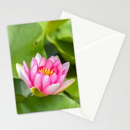 Red Water Lily 2 Stationery Cards