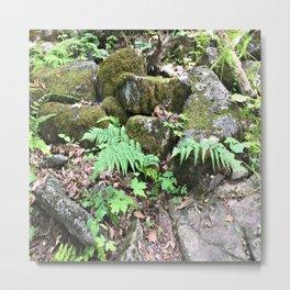 Fern Forest Floor Metal Print