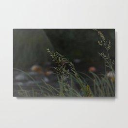 Oak Creek Grass - Sedona, Arizona, USA Metal Print