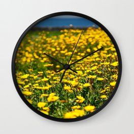 Field of yellow daisies Wall Clock