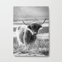 Scottish Highland Cattle in black and white Metal Print