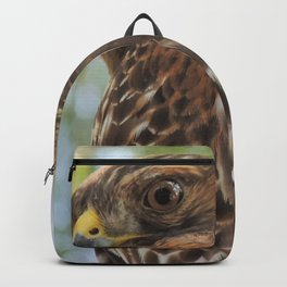 Young Red-Shouldered Hawk in a Desert Willow Backpack