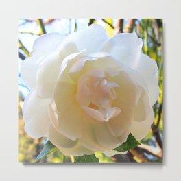 Himalayan Rose Metal Print