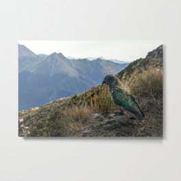 Kea, Fiordland National Park Metal Print