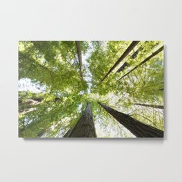 The Redwood National and State Parks Metal Print