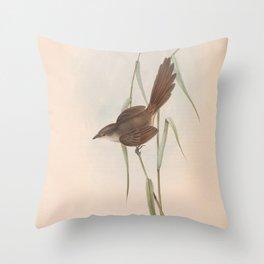 Bristle Bird dasyornis australis3 Throw Pillow