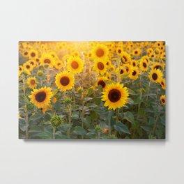 Sunflowers Field Landscape Metal Print