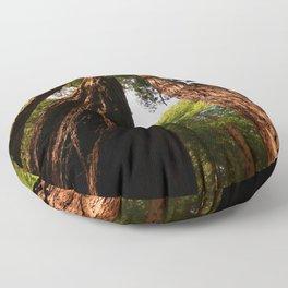 Redwood Tree Tops Floor Pillow