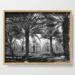Vintage Palms Trees : Coachela Valley California 1937 Serving Tray