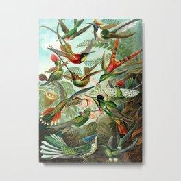Ruby-throated Hummingbirds & Hummingbirds of the World Rainforest Garden Still Life painting Metal Print