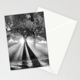 Sunrays through the oaks. Foggy morning. Stationery Cards