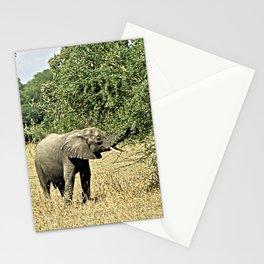 Little African Elephant Acacia Tree Safari Africa Stationery Cards