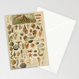 Adolphe Millot - Nouveau Larousse Illustré - Mollusques (Molluscs) (1910) Stationery Cards