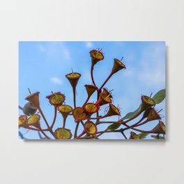 Flowering Gum 3. No Flower. Australia. Metal Print