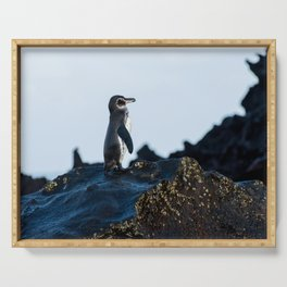 Galapagos Penguin on the Rocks Serving Tray
