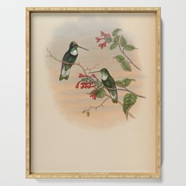 Vintage Print - A Monograph of the Hummingbirds (1849) - Pasco Collared Inca Serving Tray