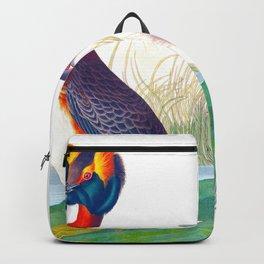 Horned Grebe John James Audubon Scientific Illustration Birds Of America Drawings Backpack