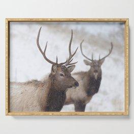 Watercolor Elk Juvenile 19, Estes Park, Colorado, Winter Paws Serving Tray