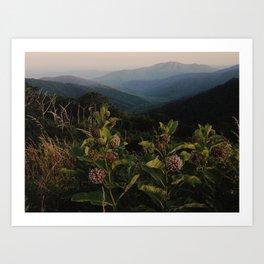Milkweed in Shenandoah National Park Art Print