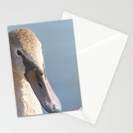 Juvenile brown swan portrait close up, Mute swan (Cygnus olor) Stationery Cards
