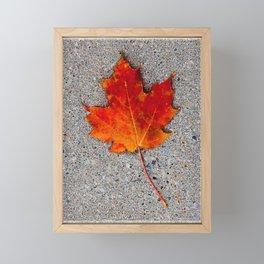 The Maple Leaf Framed Mini Art Print