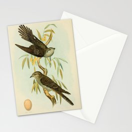 Vintage Print - Birds of South Australia (1910) - Pallid Cuckoo Stationery Cards