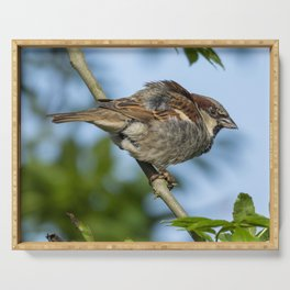 Young house sparrow Serving Tray